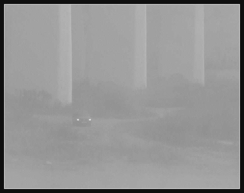 В тумане - павел Труханов
