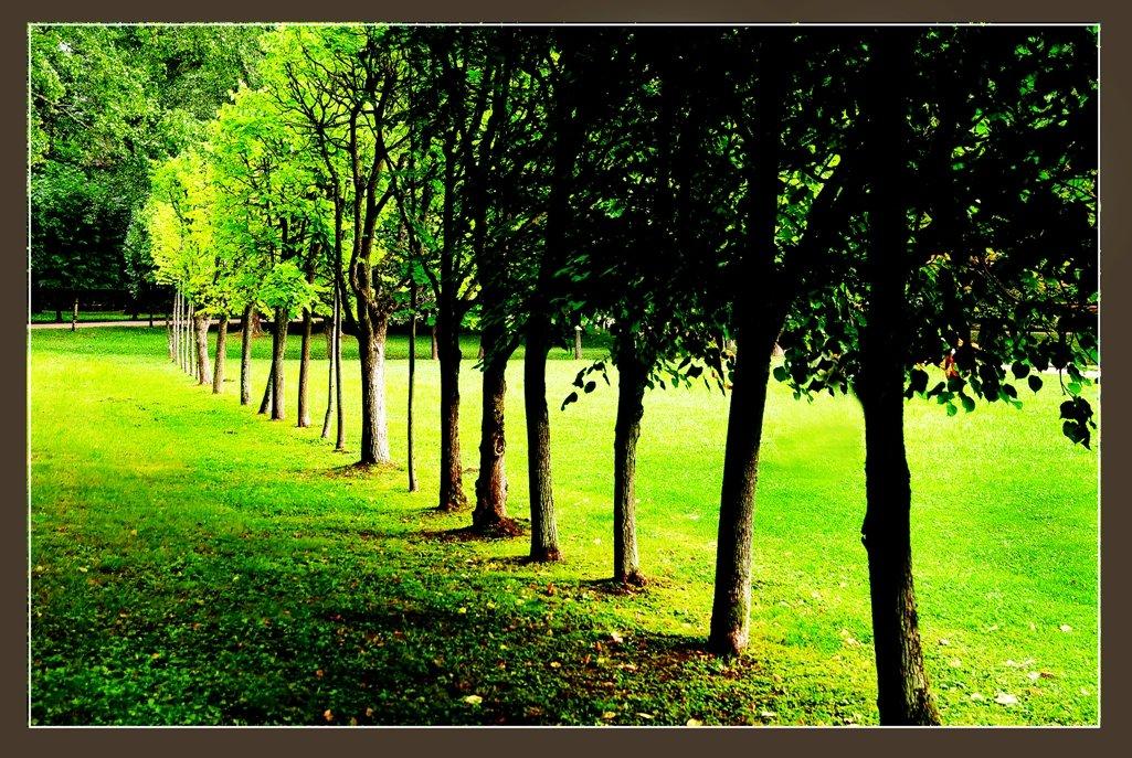 питерские парки - мирон щудло
