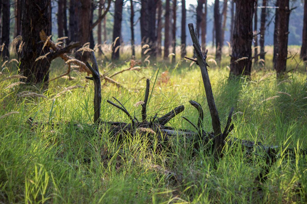 Кинбурнский лес - Veronika Mischenko