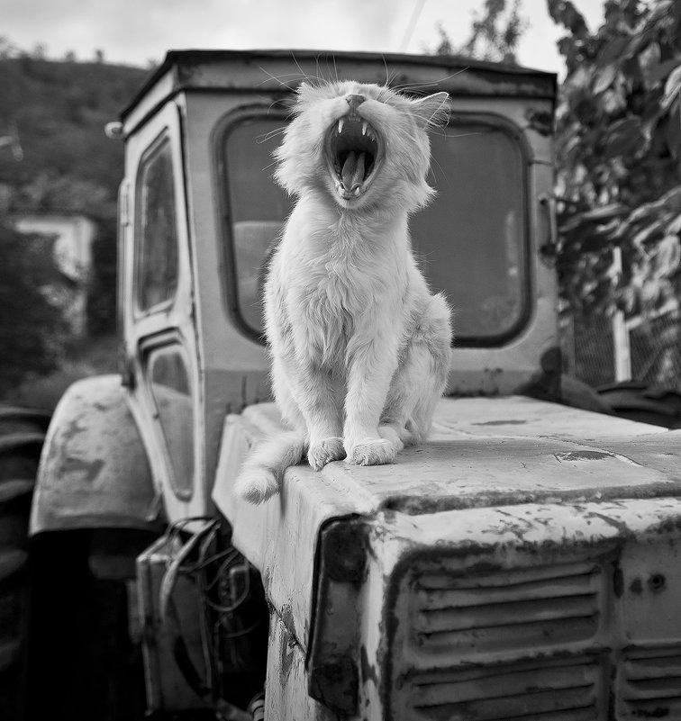 Тигр на мгновение - Сергей Михайлов