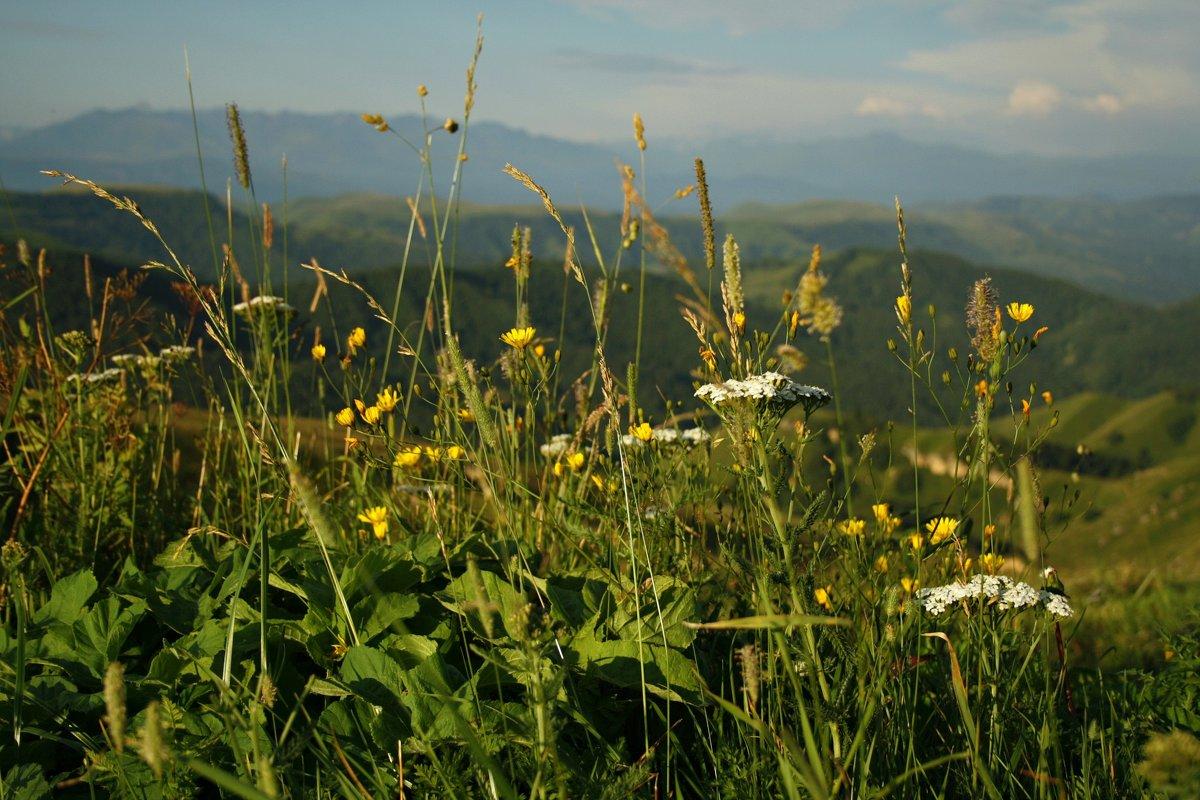 Горные цветы - Serdechko (Лариса) Кальнина