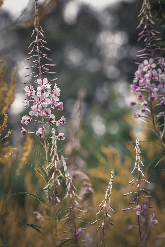 Цветы - Денис Спахов