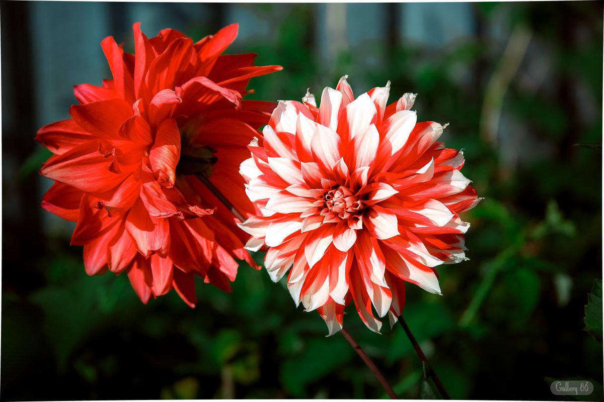 Красивые обои - Лёха Антипин