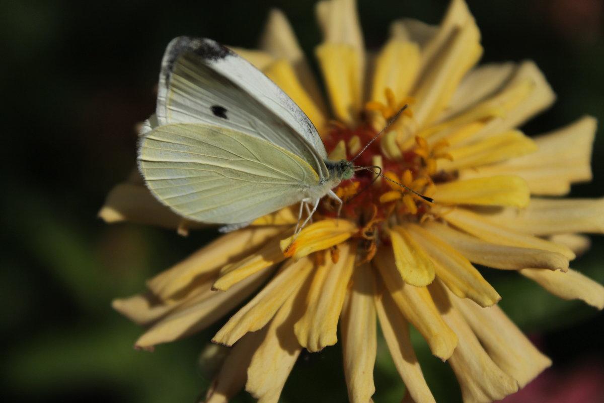 бабочка - Ирина Рыкина