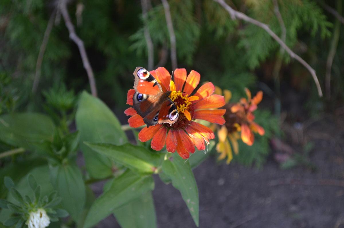 Бабочка) - Никита Сапронов