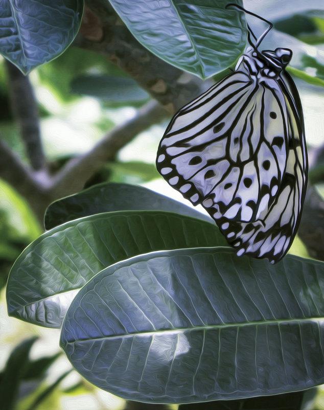 Бабочка Лесная Нимфа. - Барбара