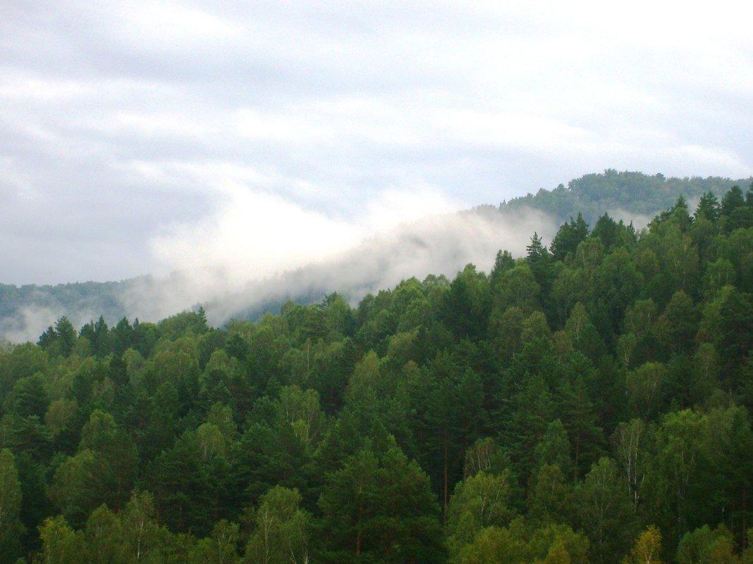 Облако в горном лесу - Наталья Золотых-Сибирская