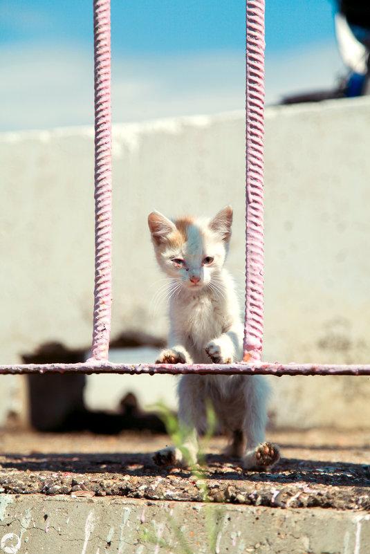 Голодный котёнок - Павел Крутенко