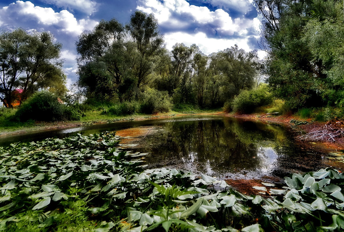 Кувшинковая поляна - Сергей S.Tulpan