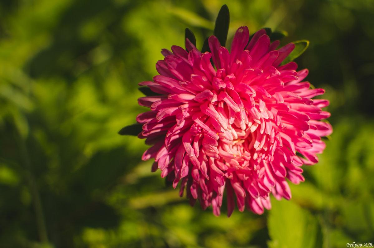 Цветет еще однако - Alexander Royvels