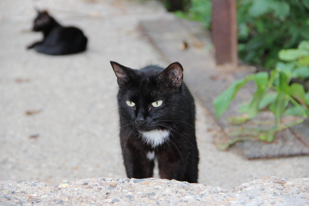 кошка в поисках - Александр Быков