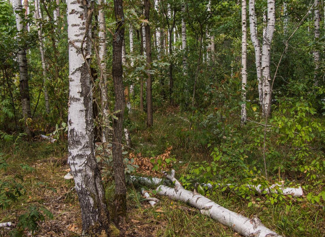 В смешанном лесу - Виктор