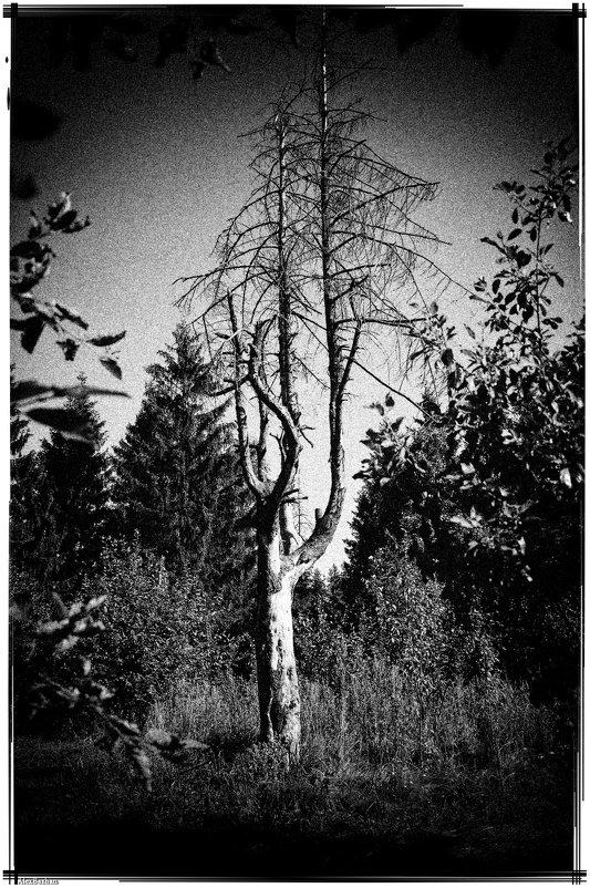 Деревья умирают стоя... - Алексей Бажан