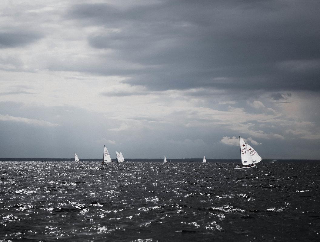 лебеди в черной воде - Анастасия Фёдорова