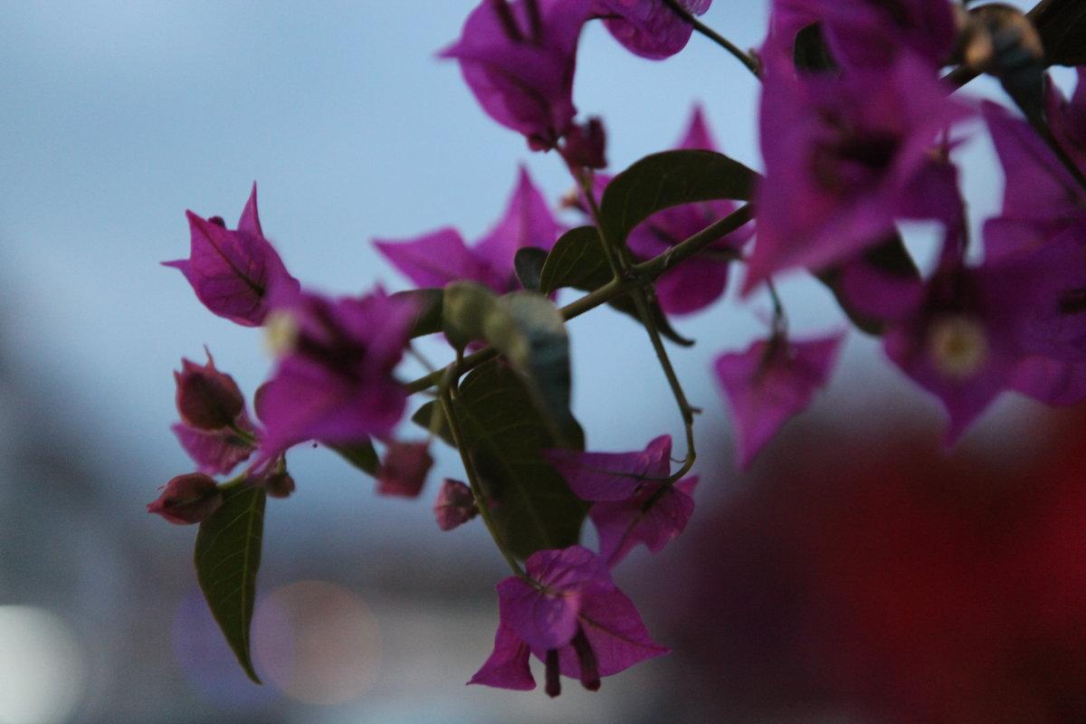 Фиолетовые цветочки - Артем Бардюжа