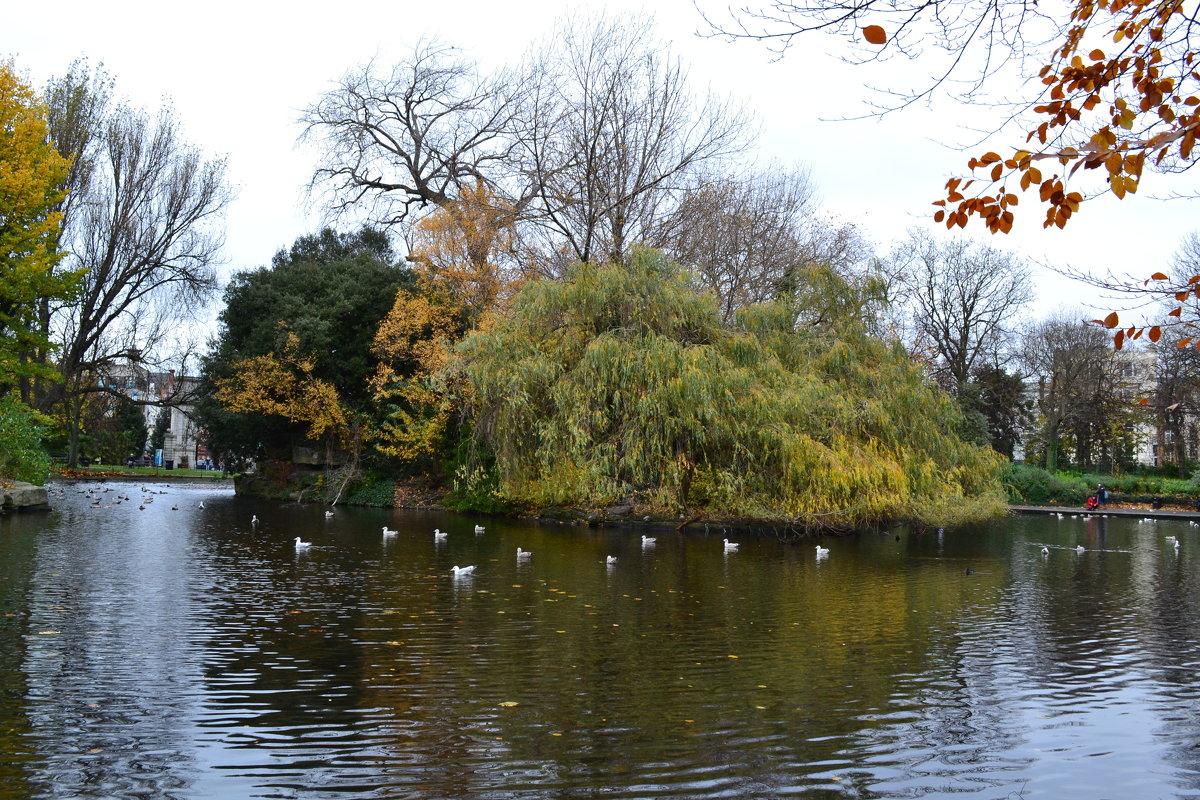 Парк в Дублине. - zoja