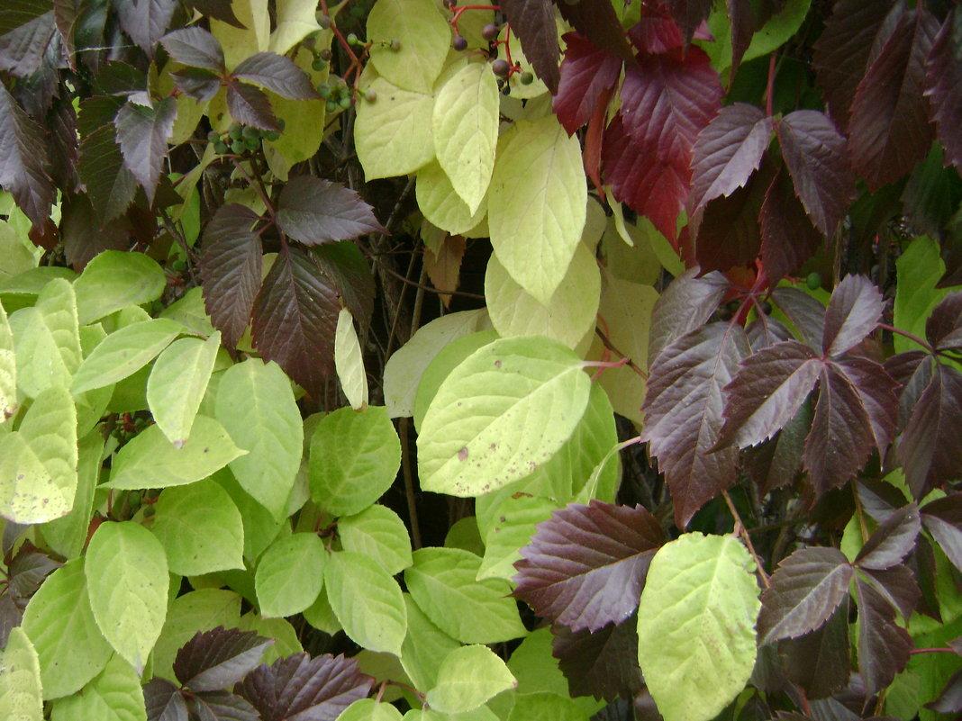 Осенние листя - Анатолий