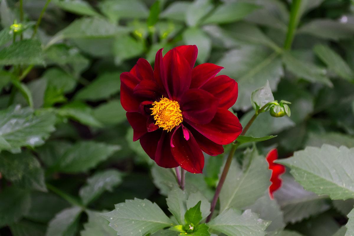 Городские цветы - Sergey Kuznetcov