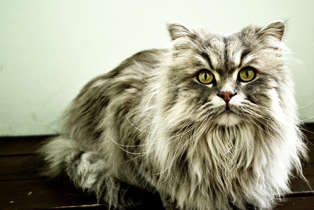 Серьезному коту - серьезные фото - Ольга Жукова