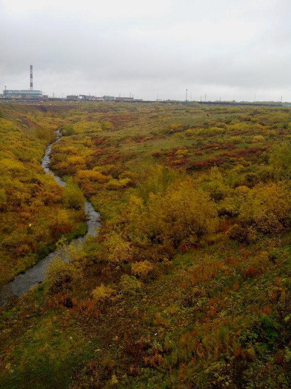 разноцветный ковёр тундры - Светлана Козлова