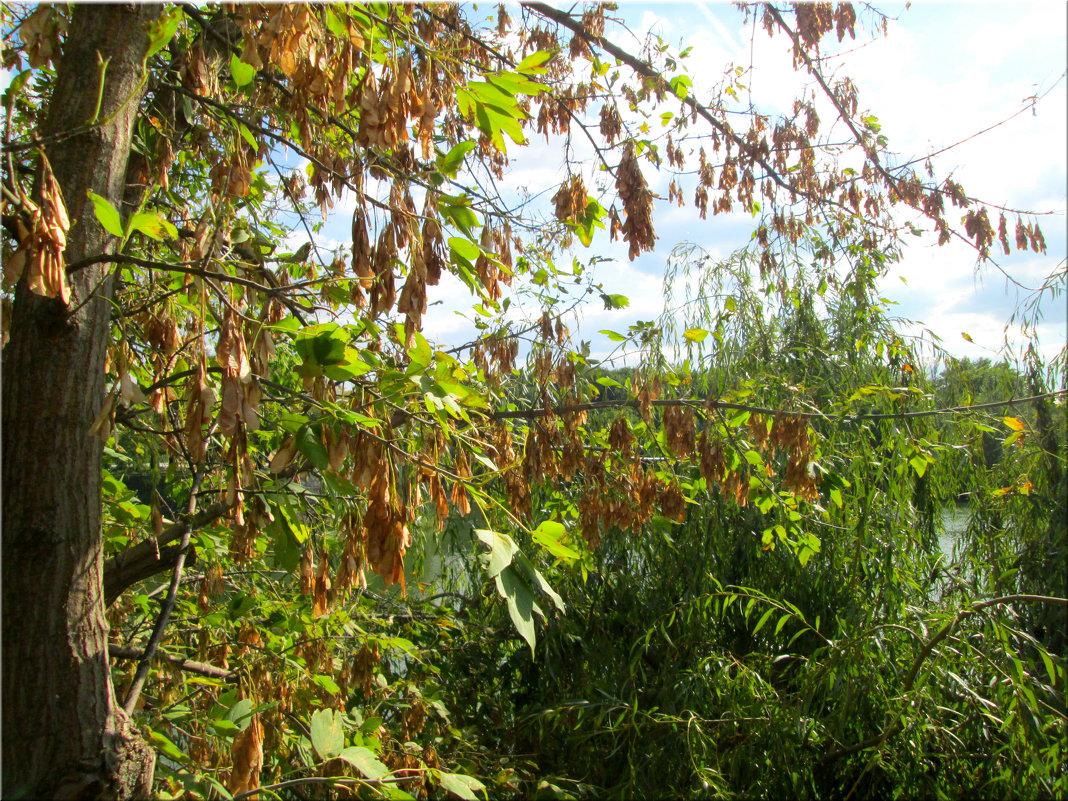 Осенняя акварель... - Тамара (st.tamara)