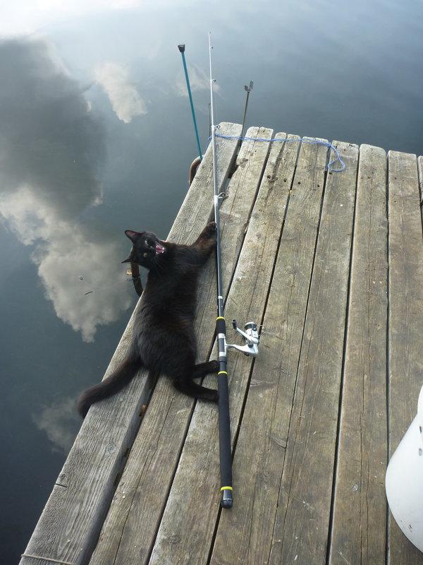 рыболовные снасти cat