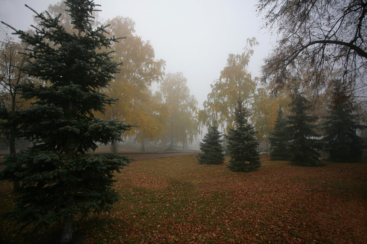 В парке - Николай Алехин