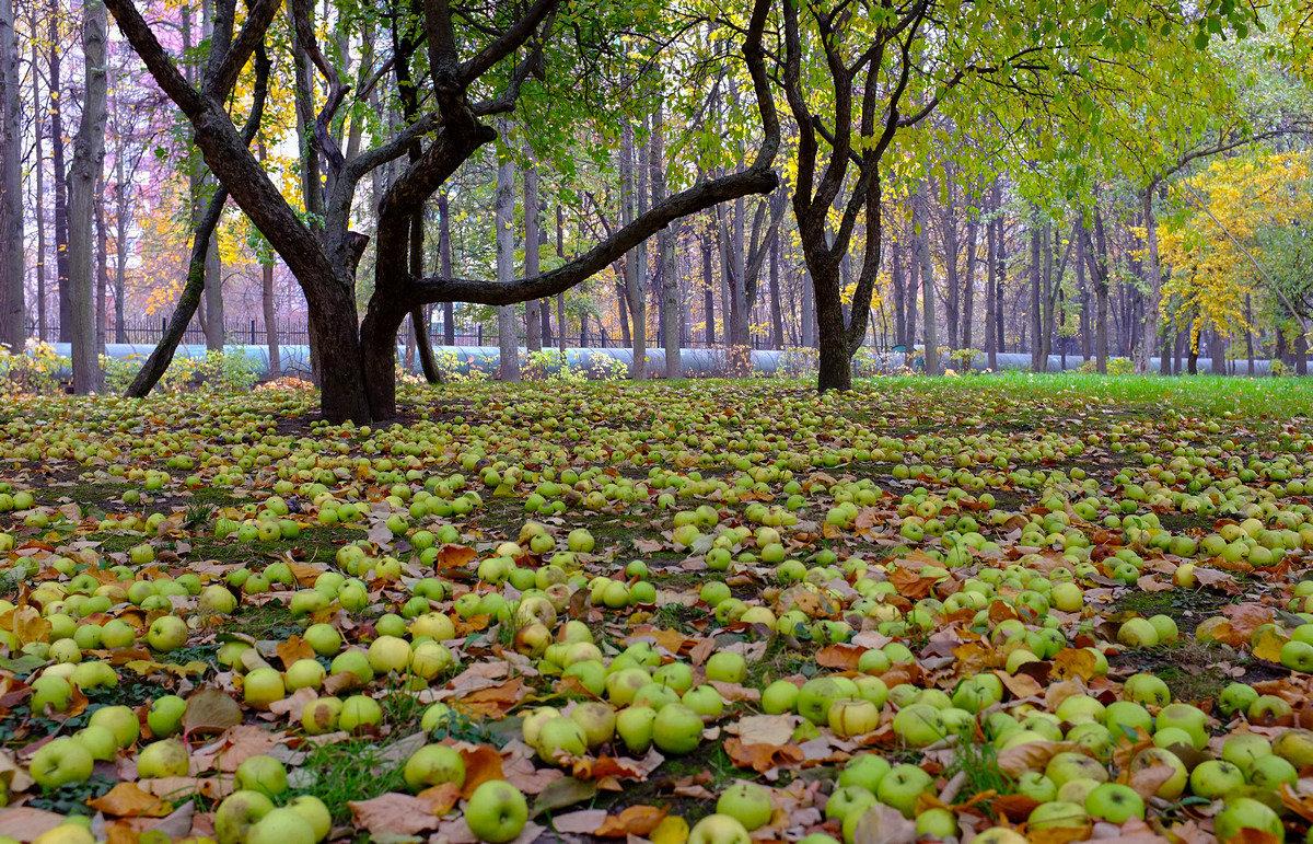Осень 2 - Sergey Izotov