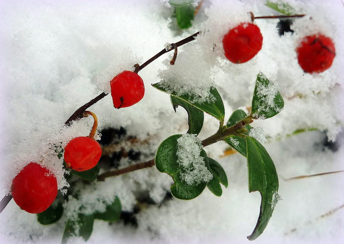 плоды ландыша