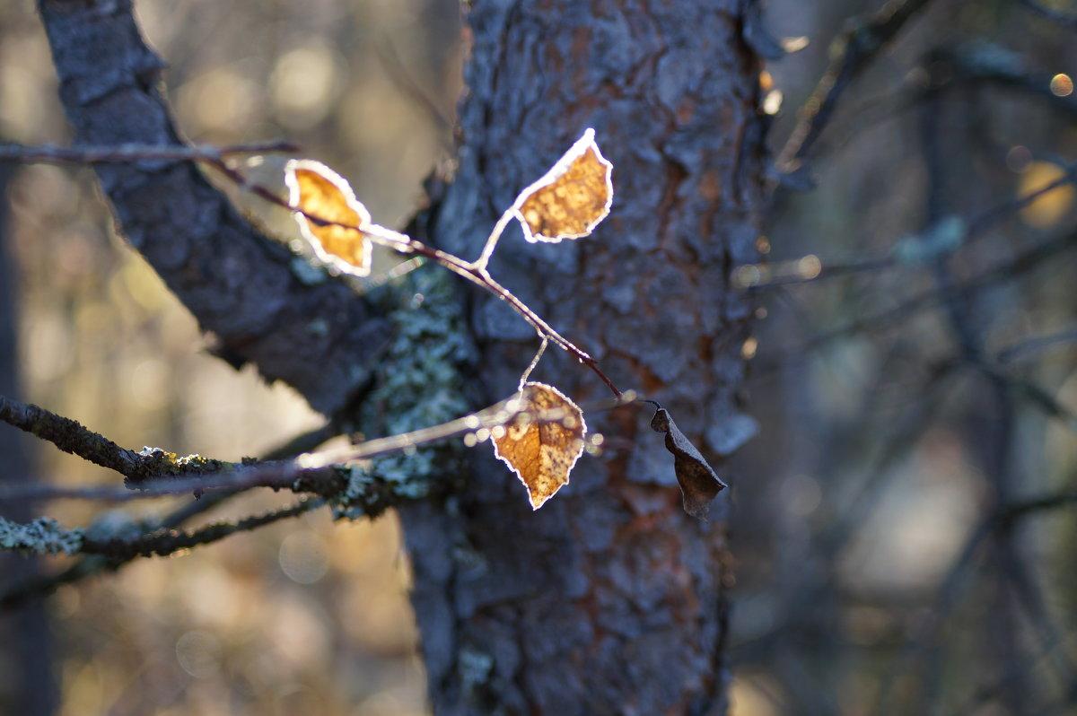 Листья осени..... - Диана Мелина