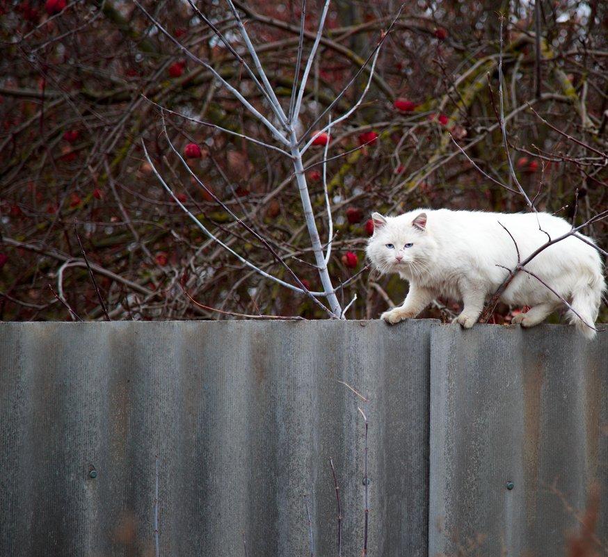 Крадущийся кот) - Наталья Шевякова