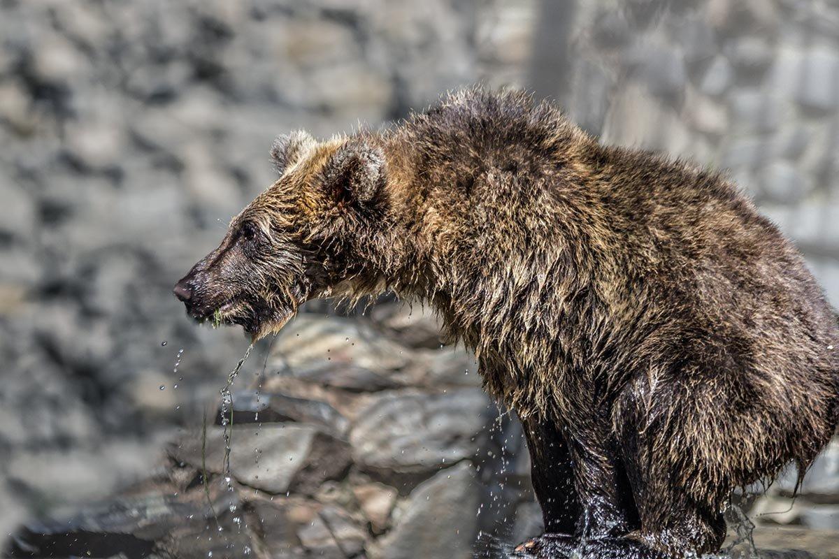 Медвежонок - Nn semonov_nn