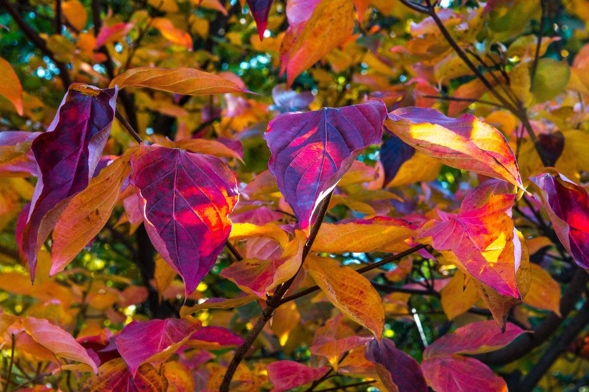 Радуга листьев - Galina Kazakova