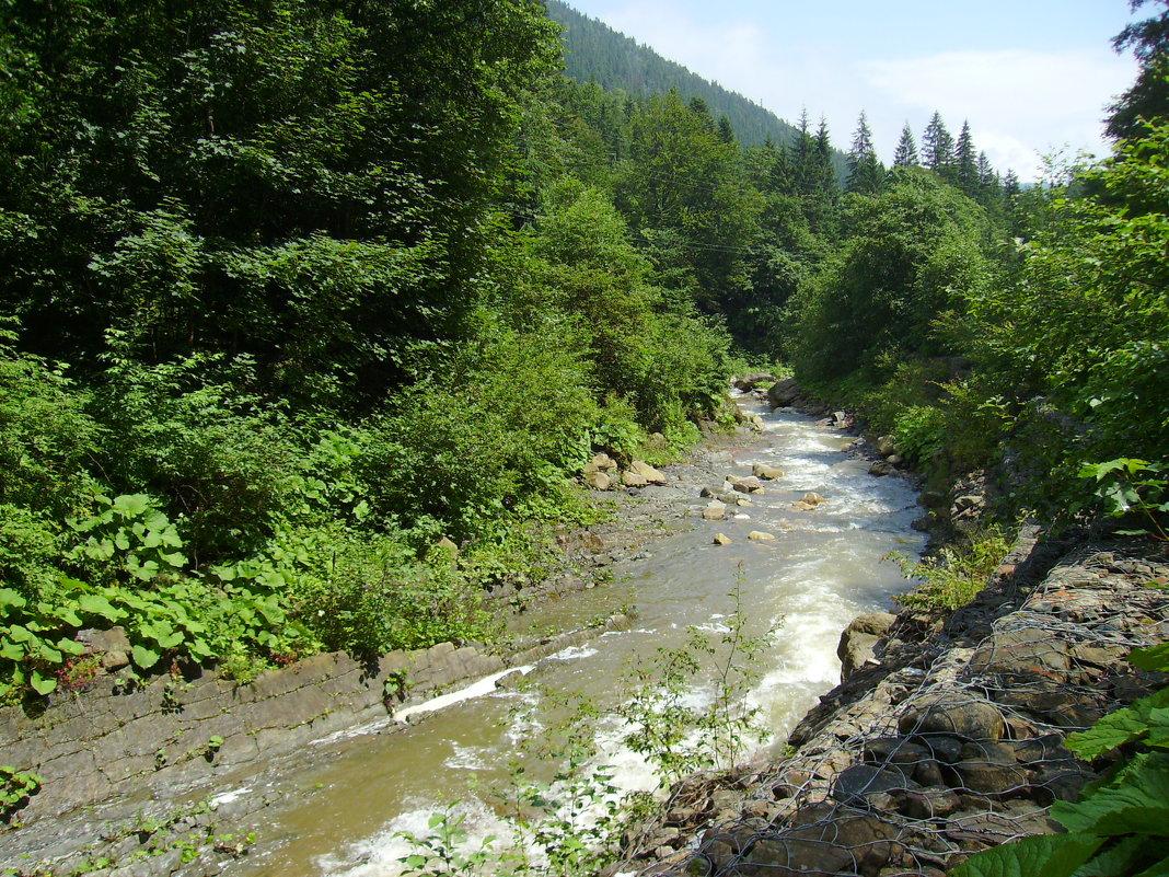 Горная  река  в  Карпатском  лесу - Андрей  Васильевич Коляскин