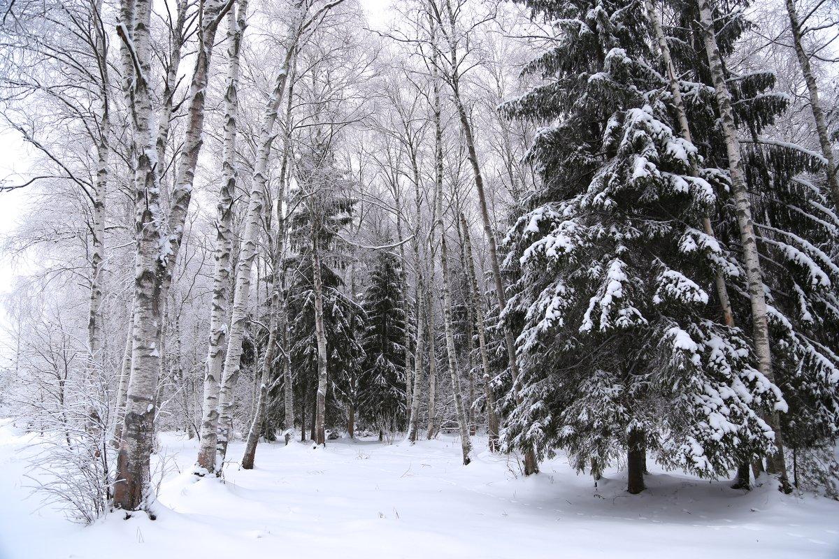 природа , лес - OLGA