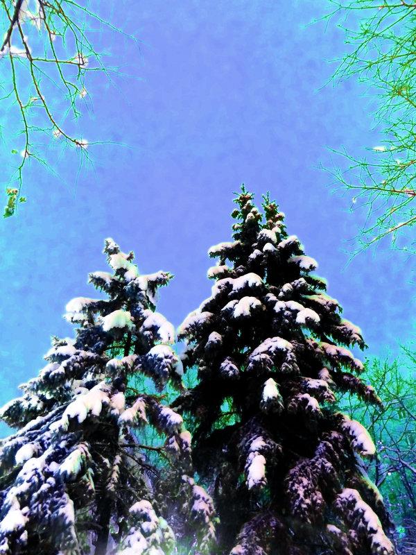 В снегу - Лариса Корж