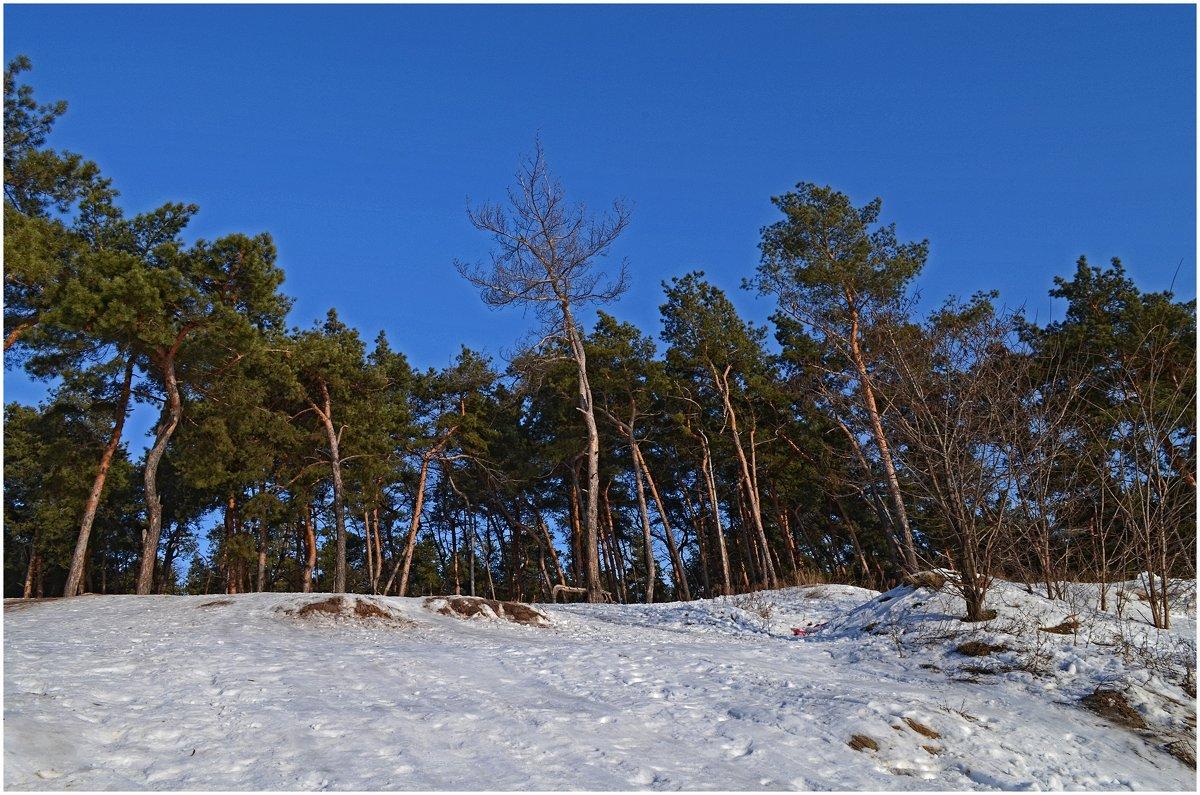 В зимний солнечный денёк - Tatiana Kretova