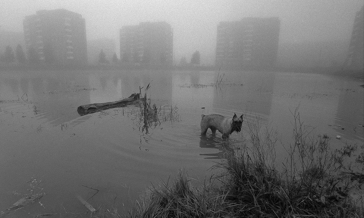 Туман - Анатолий