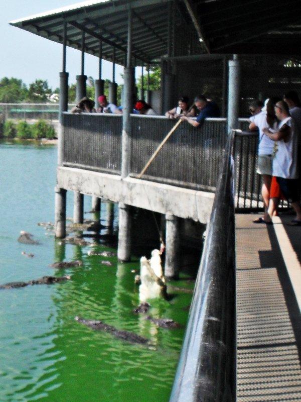 Обед крокодилов - Наталья
