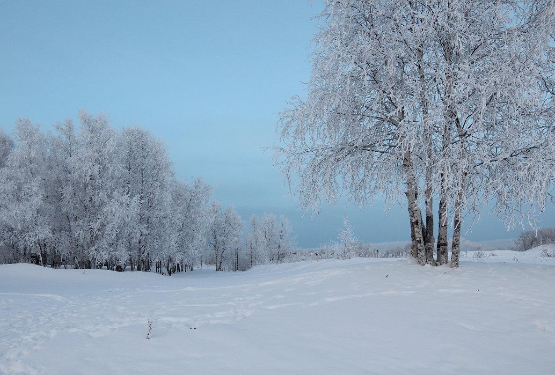 Северодвинск. Зимние берёзы - Владимир Шибинский