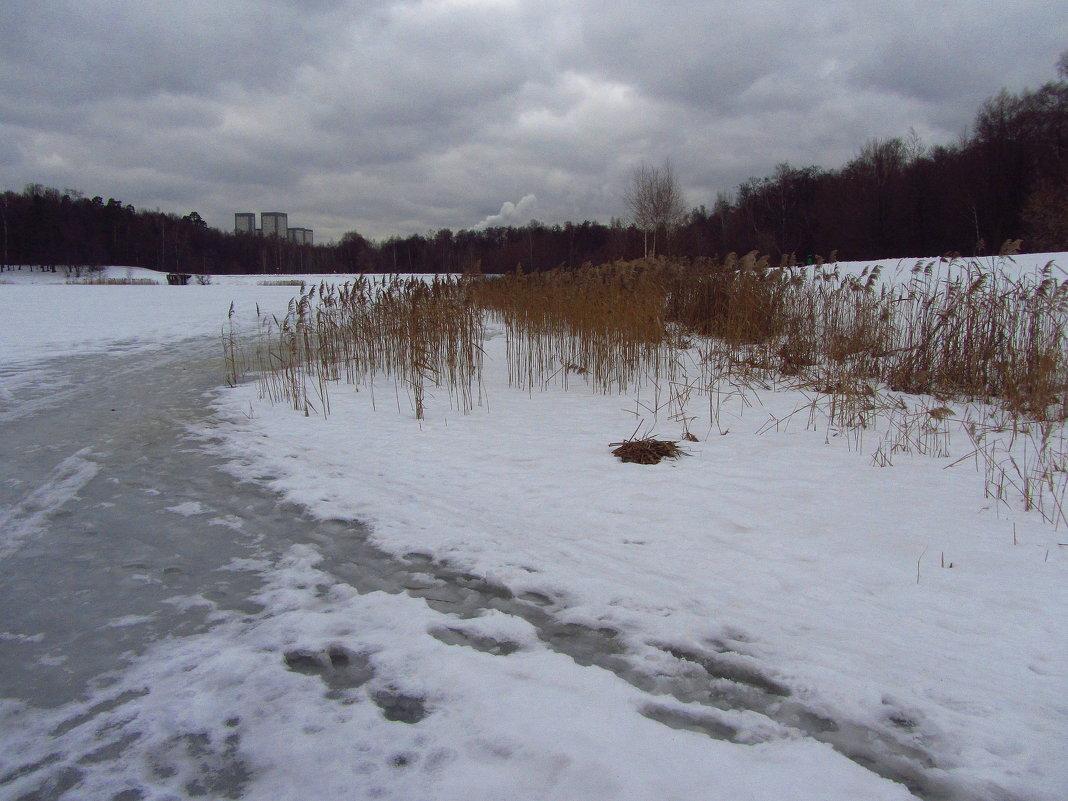 Когда повеет вдруг весною в январе - IMG_0369 - Андрей Лукьянов