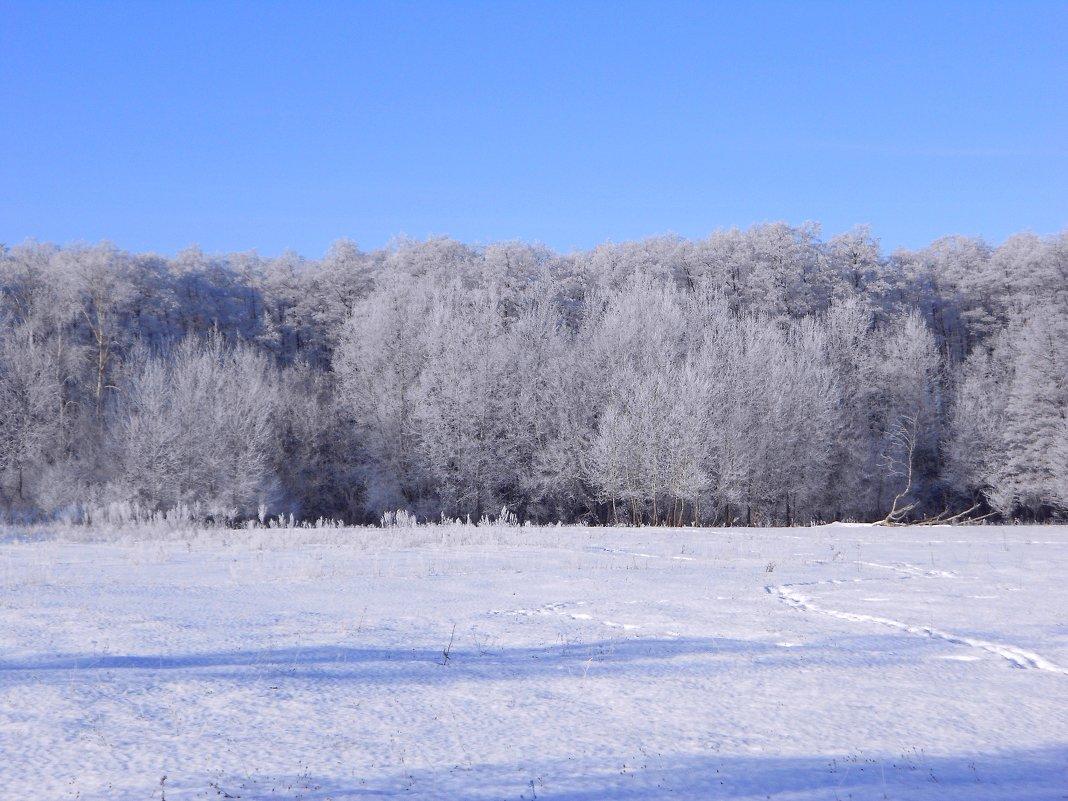 мороз и солнце - Владимир Суязов
