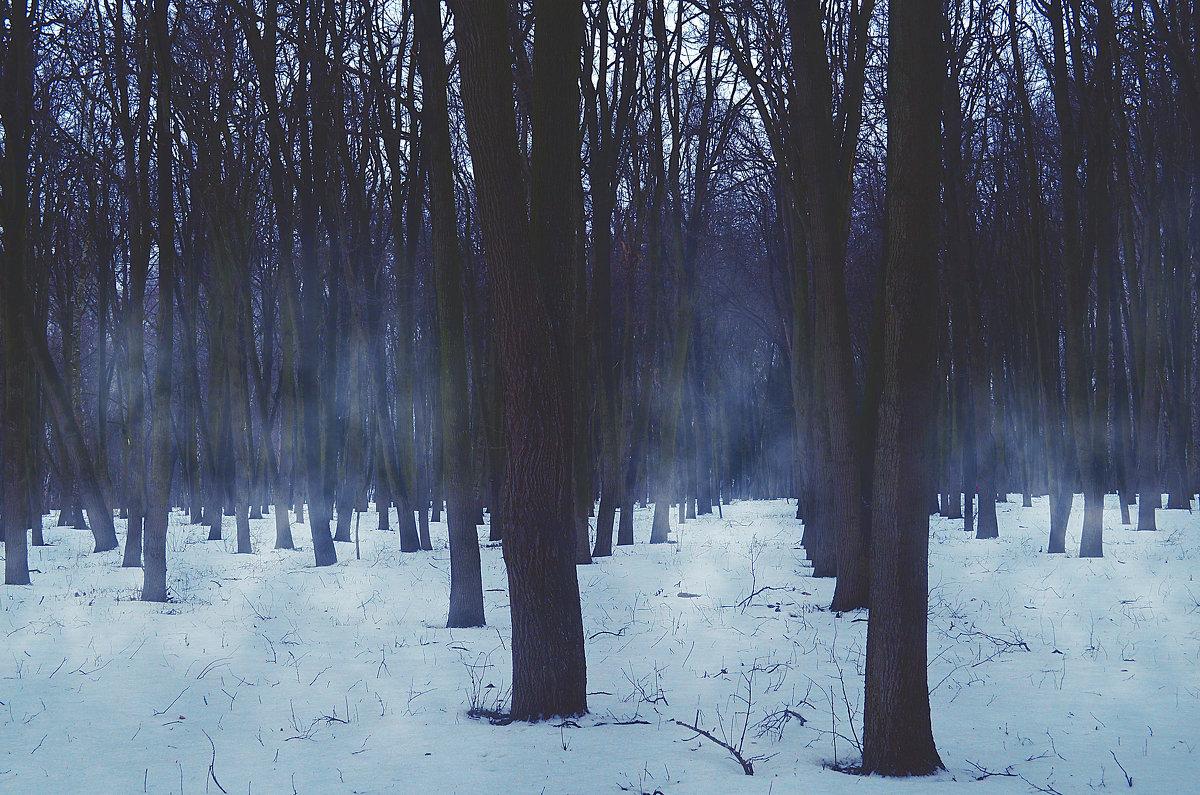 Лес - Виктория Попова
