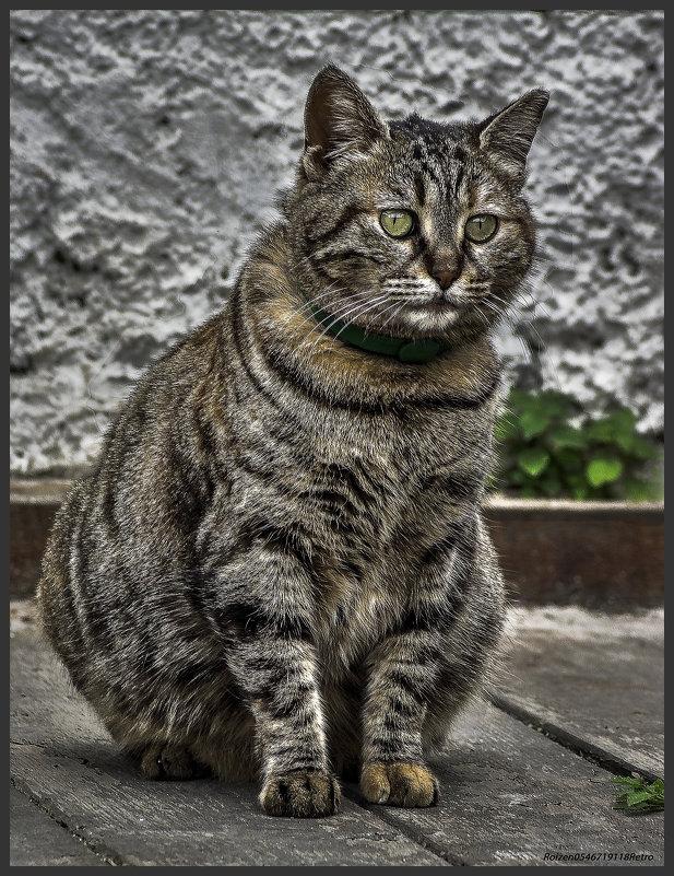 Во всей красе-из серии Кошки очарование мое! - Shmual Hava Retro