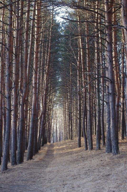 красивый вид на лес - İsmail Arda arda