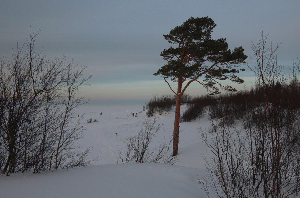 Северодвинск. Сумерки. Вид с дюны на Белое море - Владимир Шибинский