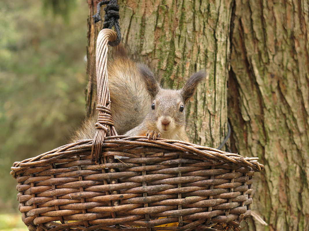 Кто унёс мои орехи? - Boris Antonov