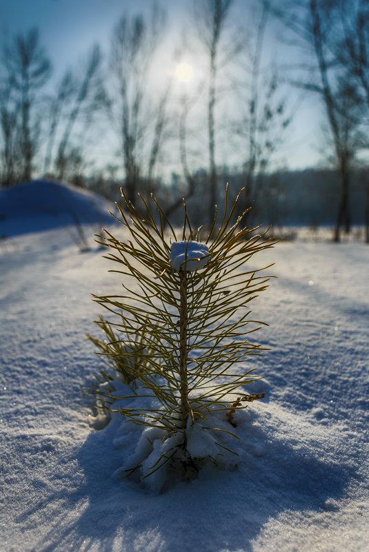 Из под снега. - Виктор Гришенков