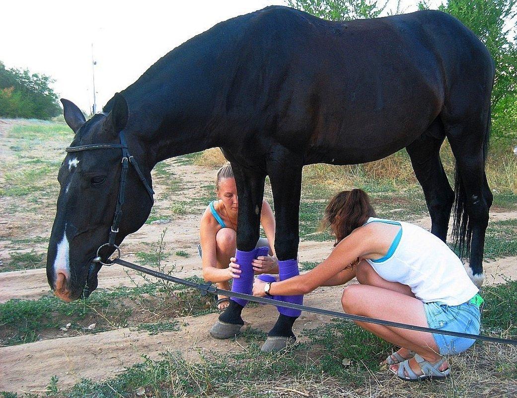 Эх, жизнь лошадиная - Natali