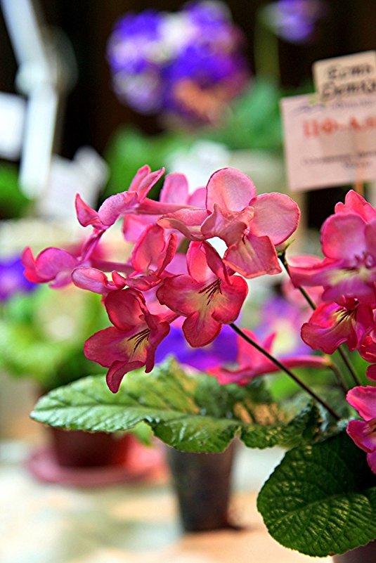 На выставке цветов - Ирина Фирсова